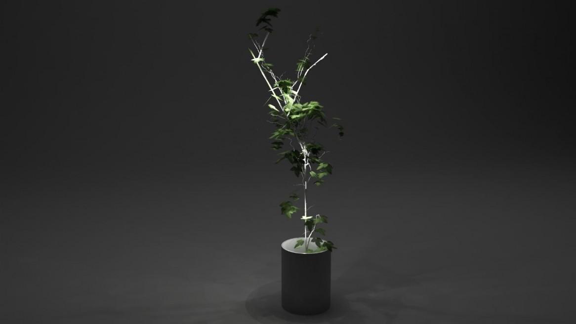 Tutor lamp concept